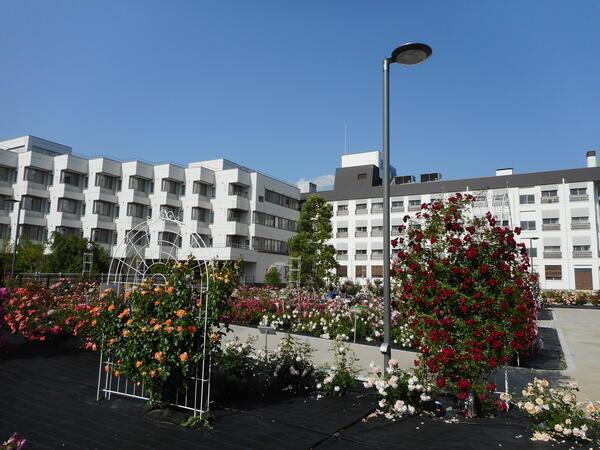 リハビリ ナイフ 春日居 病院 サイバー